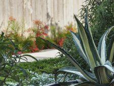 צמחייה בגינה